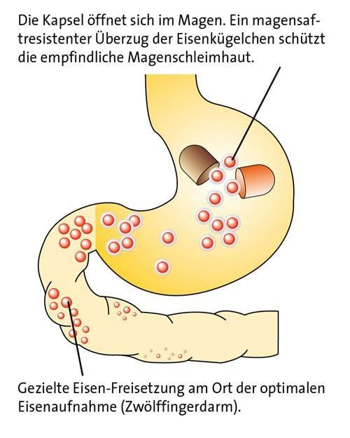ferro sanol Kapsel Wirkung im Magen Eisenmangel Eisen
