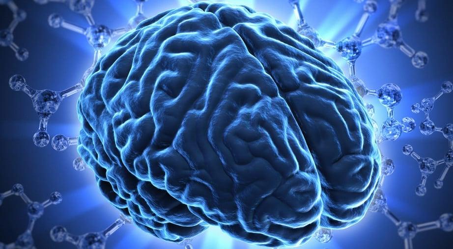 922_keyvisual-brain.jpg