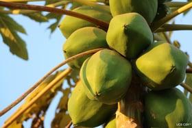 fruit on tree