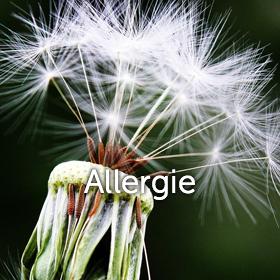 dandelion avec le mot allergie